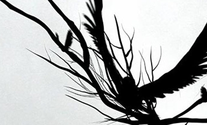 "MTV ""Crow"""